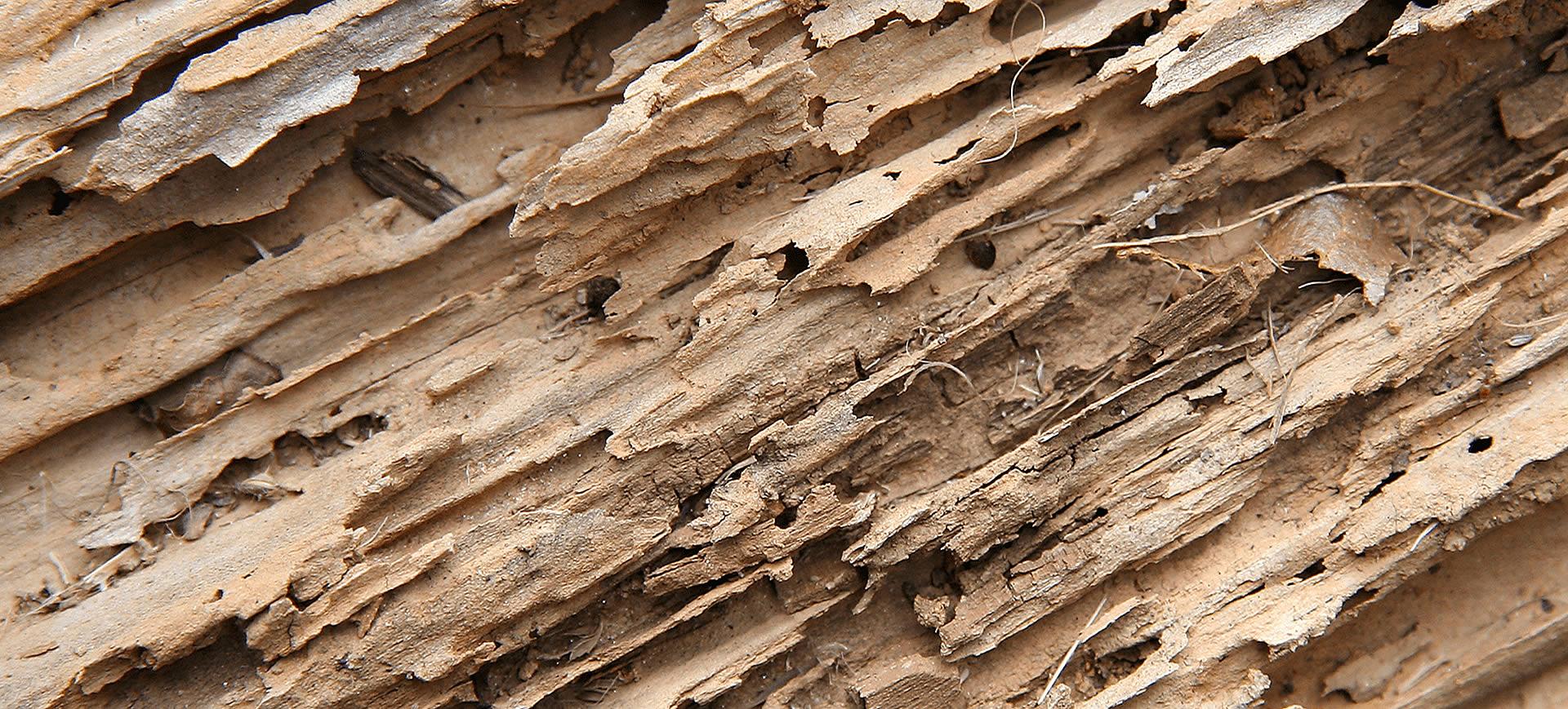 termitas en mataro