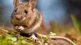 empresa de control de plagas de roedores