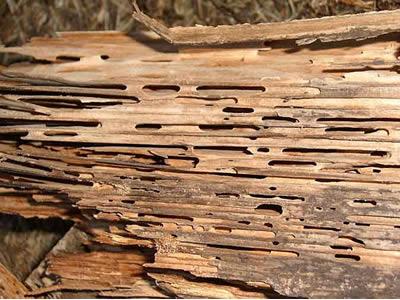 termitas en el Maresme