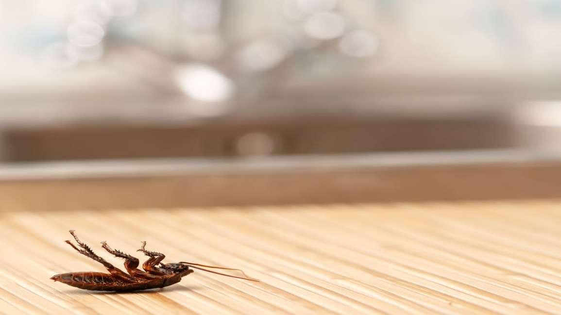 Empresa de fumigacion de cucarachas en Mataro