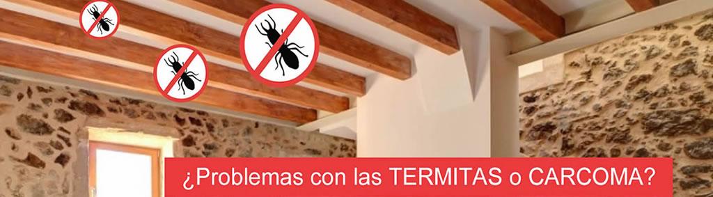 control plagas termitas carcoma